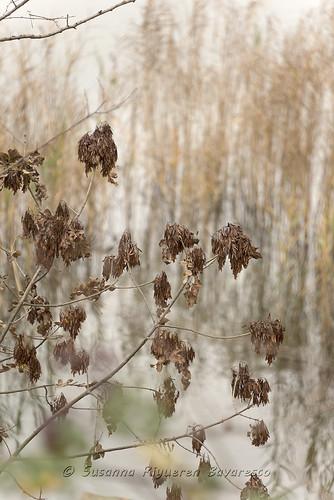 Laghi Briantei:Lago di Annone