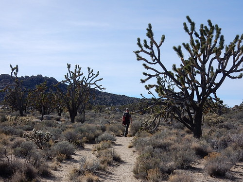 Mojave National Preserve - Teutonia Peak Trail - 1