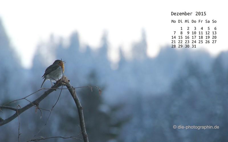rotkehlchen_dezember_kalender_die-photographin