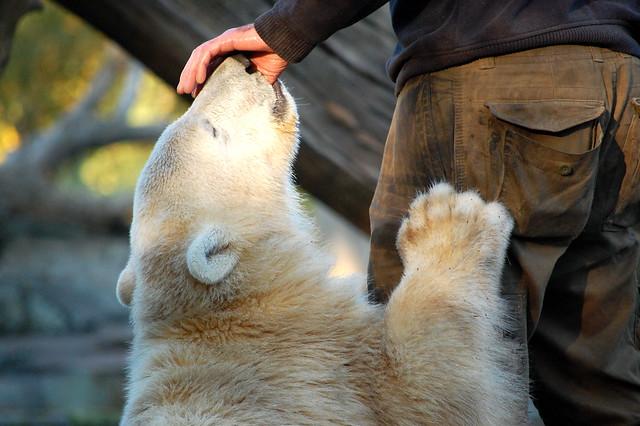 Knut 22.10.07 (43)