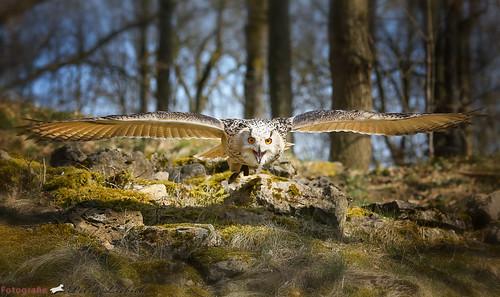 Magisch: Tiere erleben im Wildpark Bad Mergentheim