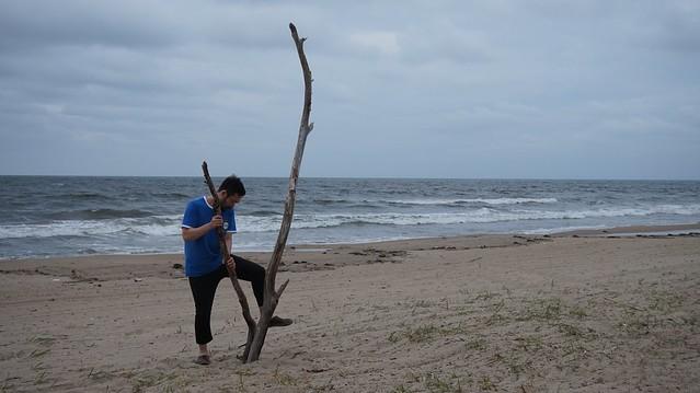 流木を生ける