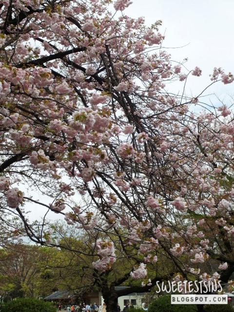 japan tokyo trip ueno park 30