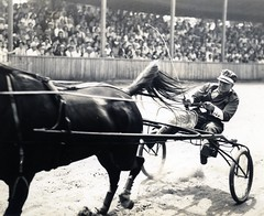 animal sports, racing, vehicle, horse, monochrome photography, horse harness, monochrome, carriage, black-and-white, harness racing,