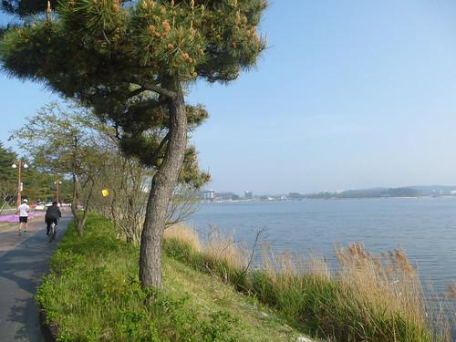 Co-Gangneung-Gyeongpoho-Lac (2)