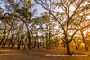 Ebony Forest, South Luangwa National Park, Zambia by Ulrich Münstermann