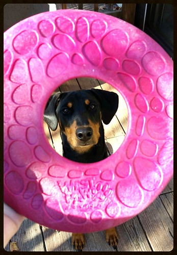 Lapdog Creations Doberman Puppy Zogoflex Air Dash Chewy