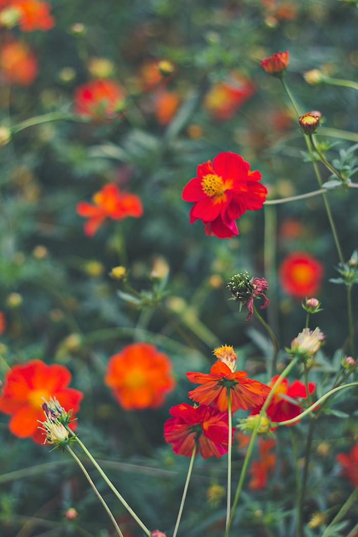 Hama-rikyu-Gardens-9