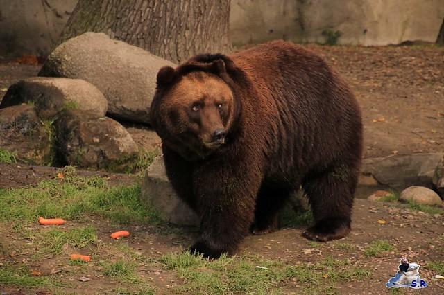 Tierpark Hagenbeck 27.09.2015 015