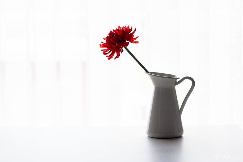 Flor en Clave alta