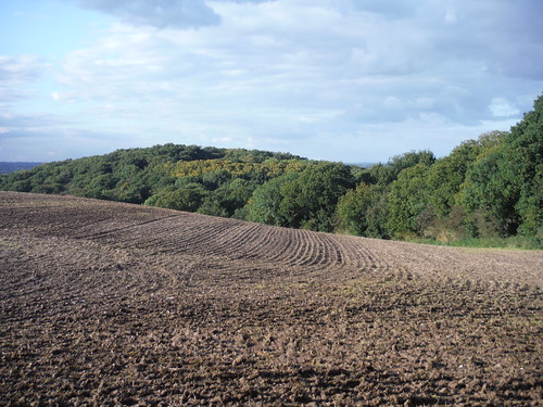 Undulating Field and Lincewood