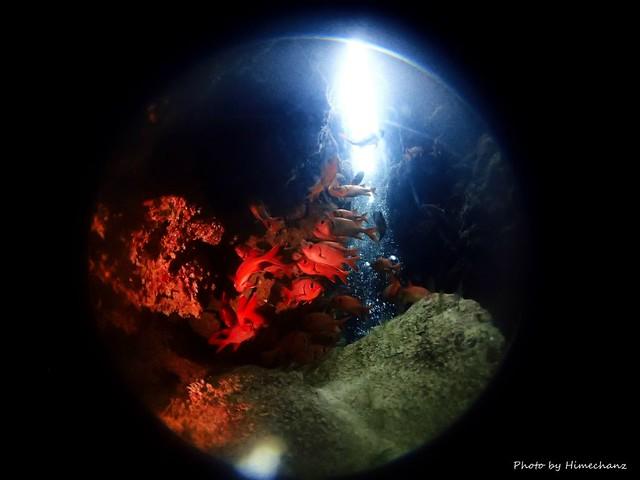 洞窟の中にはアカマツカサがいっぱい♪