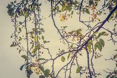 automne 15