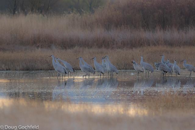 Cranes at Daybreak