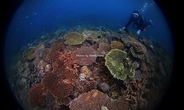とっても美しいサンゴの世界でした!
