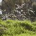 Small photo of Almond Tree & Grass