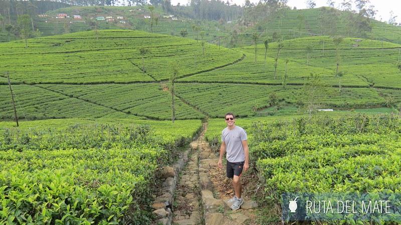 Haputale Sri Lanka (21)