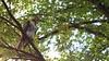 Juvenile RT Hawk 2 by mausgabe