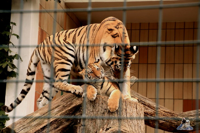 Tierpark Berlin 20.09.2015  0122