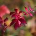 Autumn colors by Alexis2k