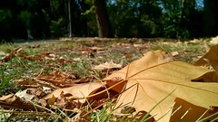 #shotonlumia #shotonmylumia #lumia735 #thelumians #nofilter #leaves #fall #autumn #naturelovers #garden #atthepark #ig_naturelovers #nature_brilliance #vivonatura #paesaggisannio