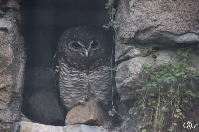 Besuch im Berliner Zoo 06.12.20156