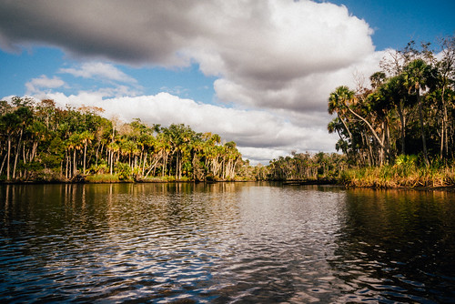 wild color green nature water clouds river landscape colorful florida outdoor palm boating tropical naturalbeauty paddling v1 waterway gulfcoast citruscounty nikon1 wildneress mirrorless thechaz chassahowitzka vsco