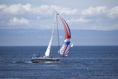 Sailboat heeling under spinnaker.. DSC_0711