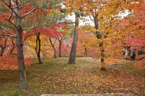 【写真】紅葉 : 東福寺