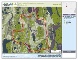 Biodiversity Modeling in New Haven