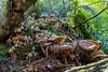 Mushroom Gathering 2