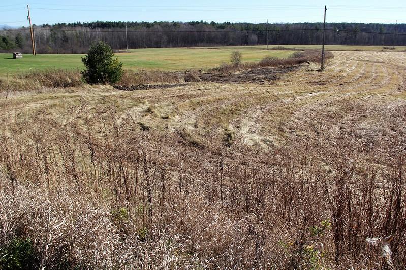future-pasture