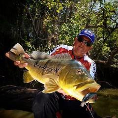 Juninho, colunista da @pescaecompanhia com um belo tucunare no rio Suiamiçu.   #pescaamadora #pesqueesolte #baitcast #fly #tucunare #pavone #pavon #peacock #peacockbass #monsterfish #anglerapproved #amazonia #amazon #suiamiçu #riosuiamicu #pescador #angle