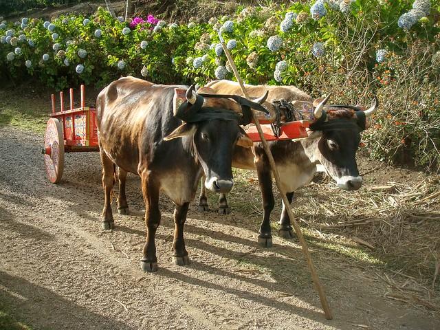Comment visiter une plantation de café au Costa Rica de façon traditionnelle... :-)