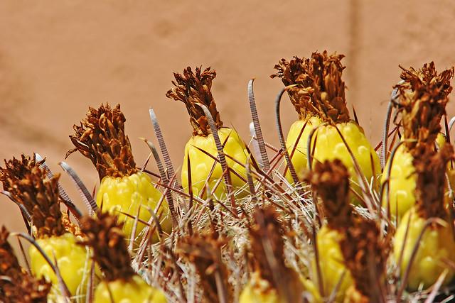 Cactus IMG_1309