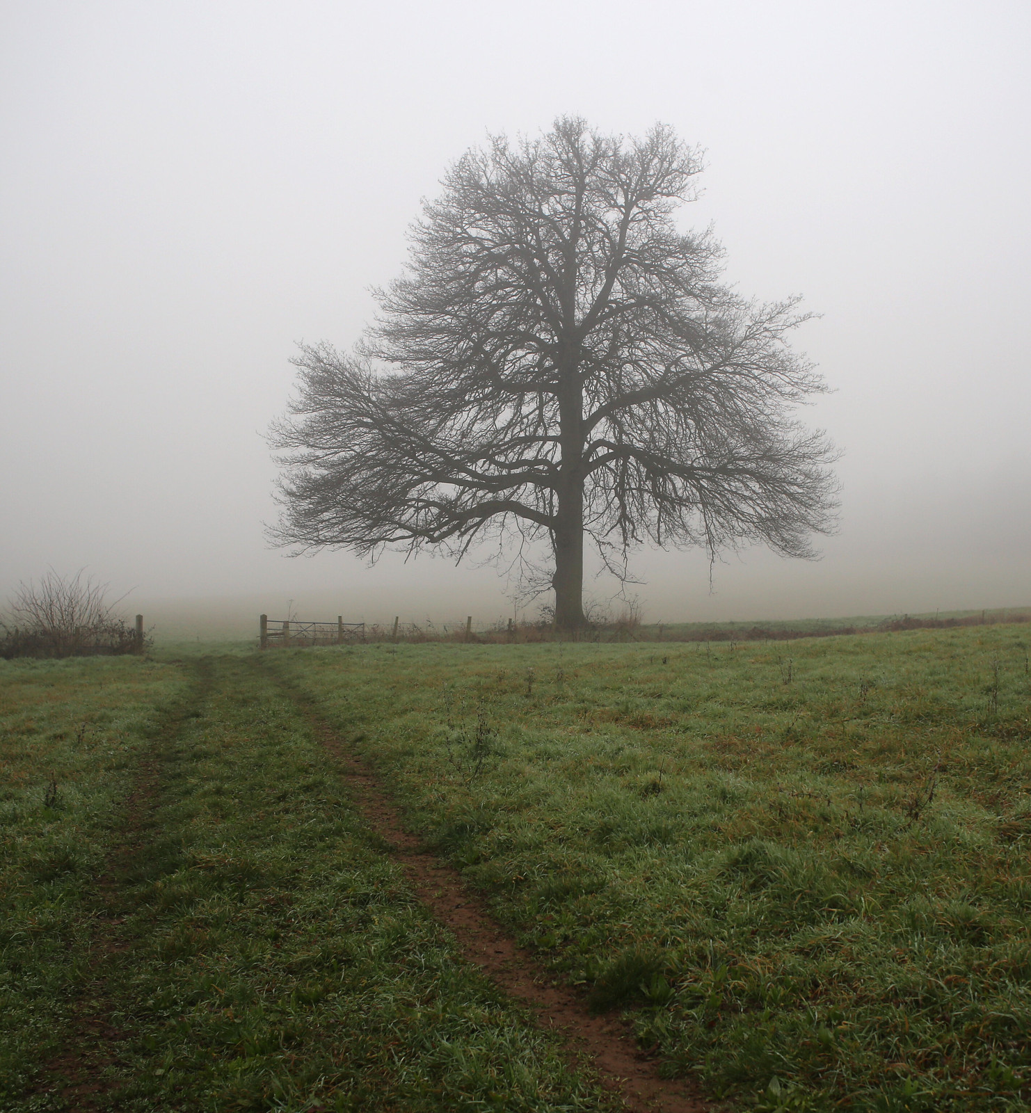 Winter A tree in the mist near Loseley Park in Surrey