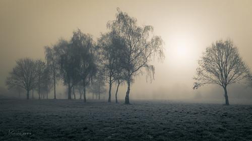 sun mist misty fog foggy sunrise sunny monochrome trees winter 169 bw frost frosty kerto landscape wow