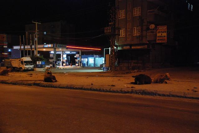 Пара йок: автостопом по Туреччині