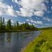 Taimen River