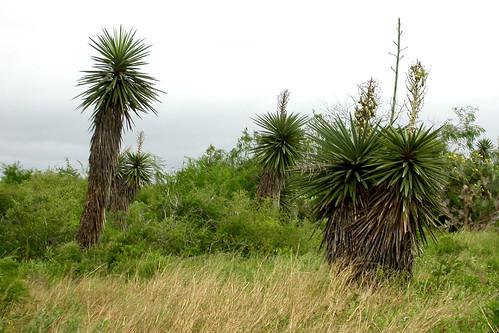 landscape paysage texas2004