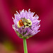 First the flower, then the bokeh, then the bee by annkelliott