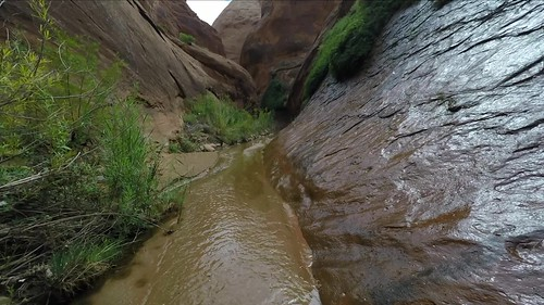 Wading in Fortymile and Willow Gulch