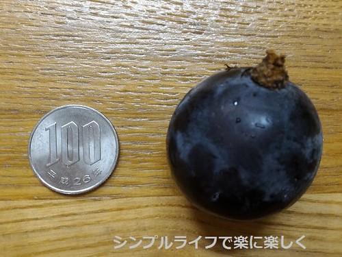藤稔、100円玉と比較