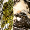 Liquen / Lichen by victor_chs