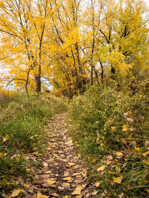 autumn walk to work