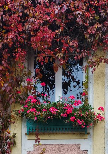 Giverny-9.jpg