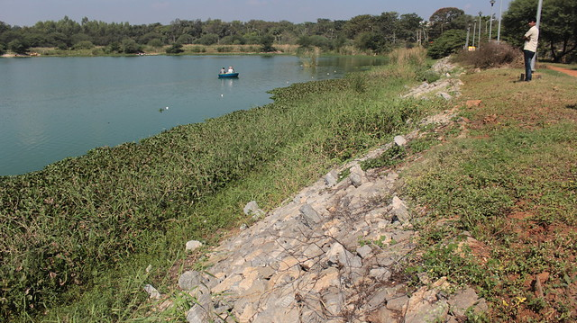"Most days, the fish is caught early mornings and evenings. But today the catch and sale warranted an extra mid-day foray into the waters. The stone embankment in the foreground is part of the 19 crore rupee investment made by BDA into ""lake rejuvenation""."