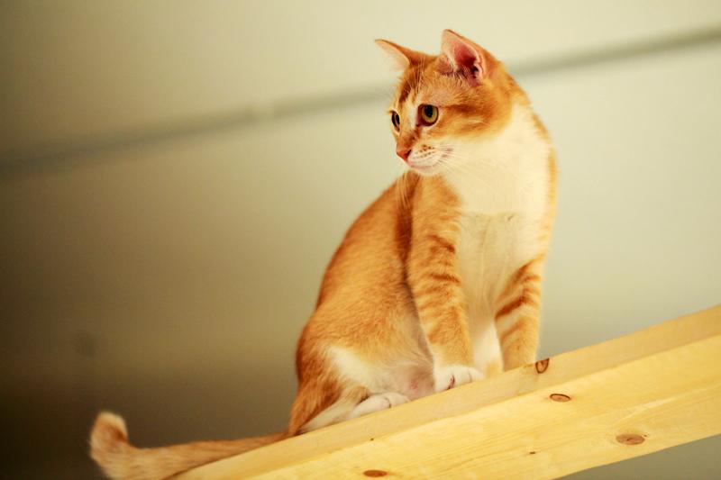 TTDI Purradise Cat Cafe Climbing Cat