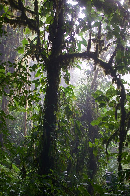 the magic light of cloudforest