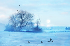 Vivaldi's Winter
